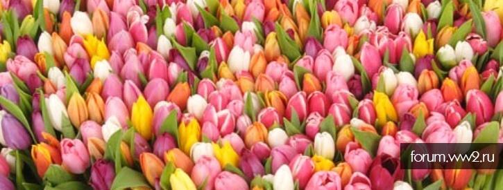 Дорогие женщины нашего форума, с 8 марта !