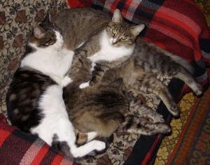 Наши домашние любимцы. Кошки, собаки, хорьки, ящерицы, улитки и т.д.