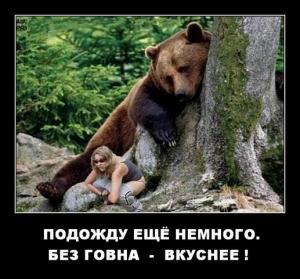 Медведи около Виняголово...