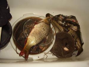 Немного позитива, рыбалка и охота, грибы и ягоды!