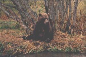 Встречи с медведями, волками, кабанами, лосями и т.д.
